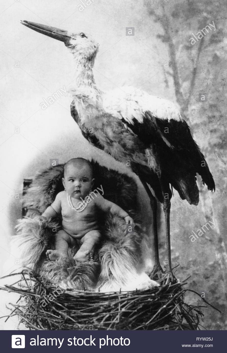 people, children, babies, stork besides baby, 1920s, Additional-Rights-Clearance-Info-Not-Available - Stock Image