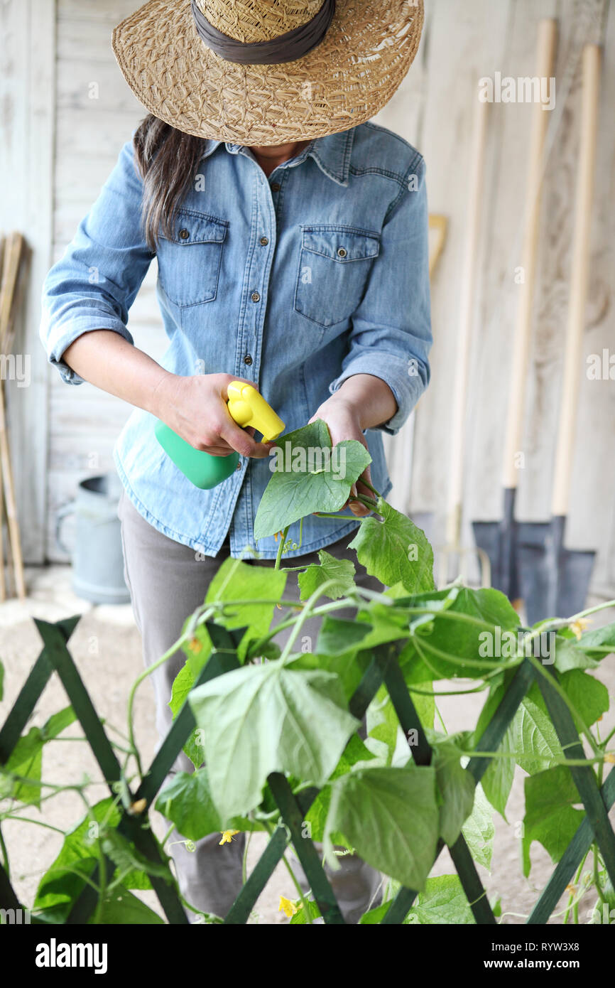 woman in vegetable garden sprays pesticide on leaf of plant with caterpillar, care of plants for growth concept - Stock Image