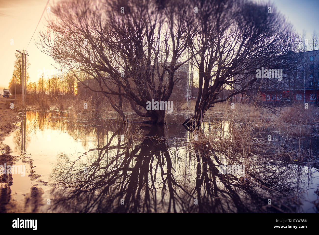 A tree is reflected in a puddle. Spring paintings. Puddles and mud Stock Photo