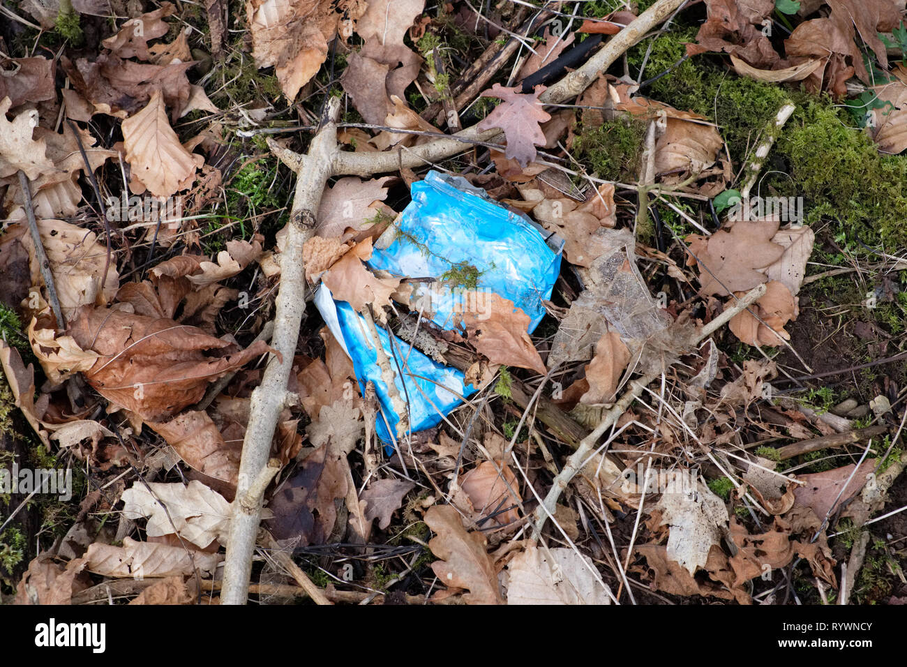 Environmental image of Waste with a Plastic non-biodegradable Plastic wrapper lying amongst leaves on the forrest floor in Scotland. - Stock Image