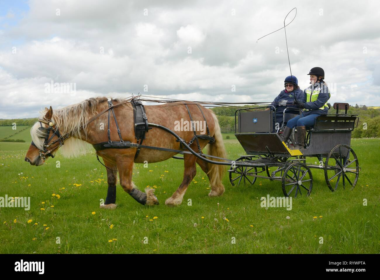 Carriage Driving run by the Riding for the Disabled Association, Marlborough Downs, Wiltshire, UK. - Stock Image