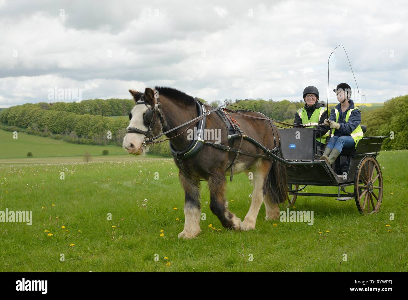 Carriage Driving run by the Riding for the Disabled Association, near Manton the Marlborough Downs, Wiltshire, UK. - Stock Image