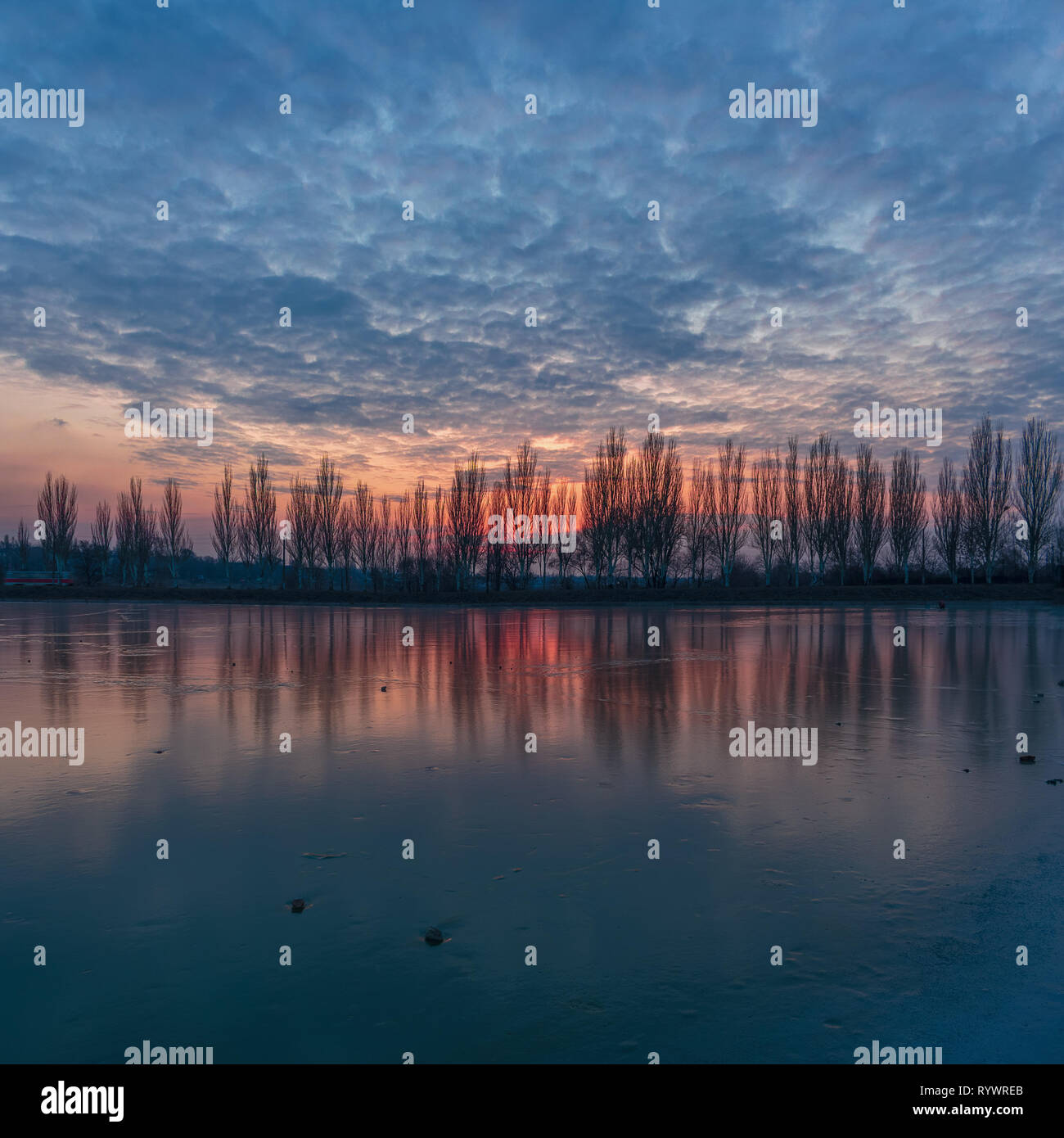 Evening winter landscape with poplar trees alley, bright cloudy sunset over the frozen river lake in Kriviy Rih, Ukraine - Stock Image