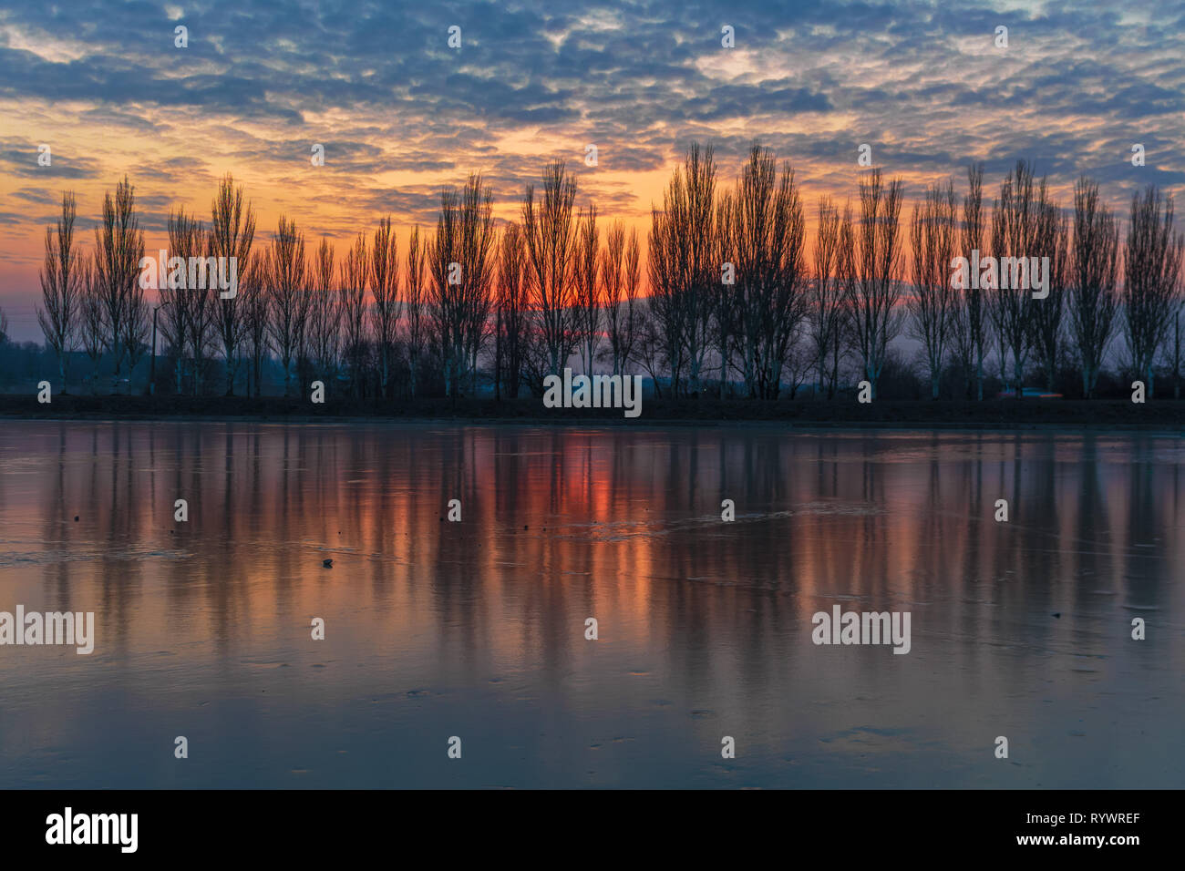 Winter bright cloudy sunset over the frozen river. Trees alley reflected in frozen still water - Stock Image