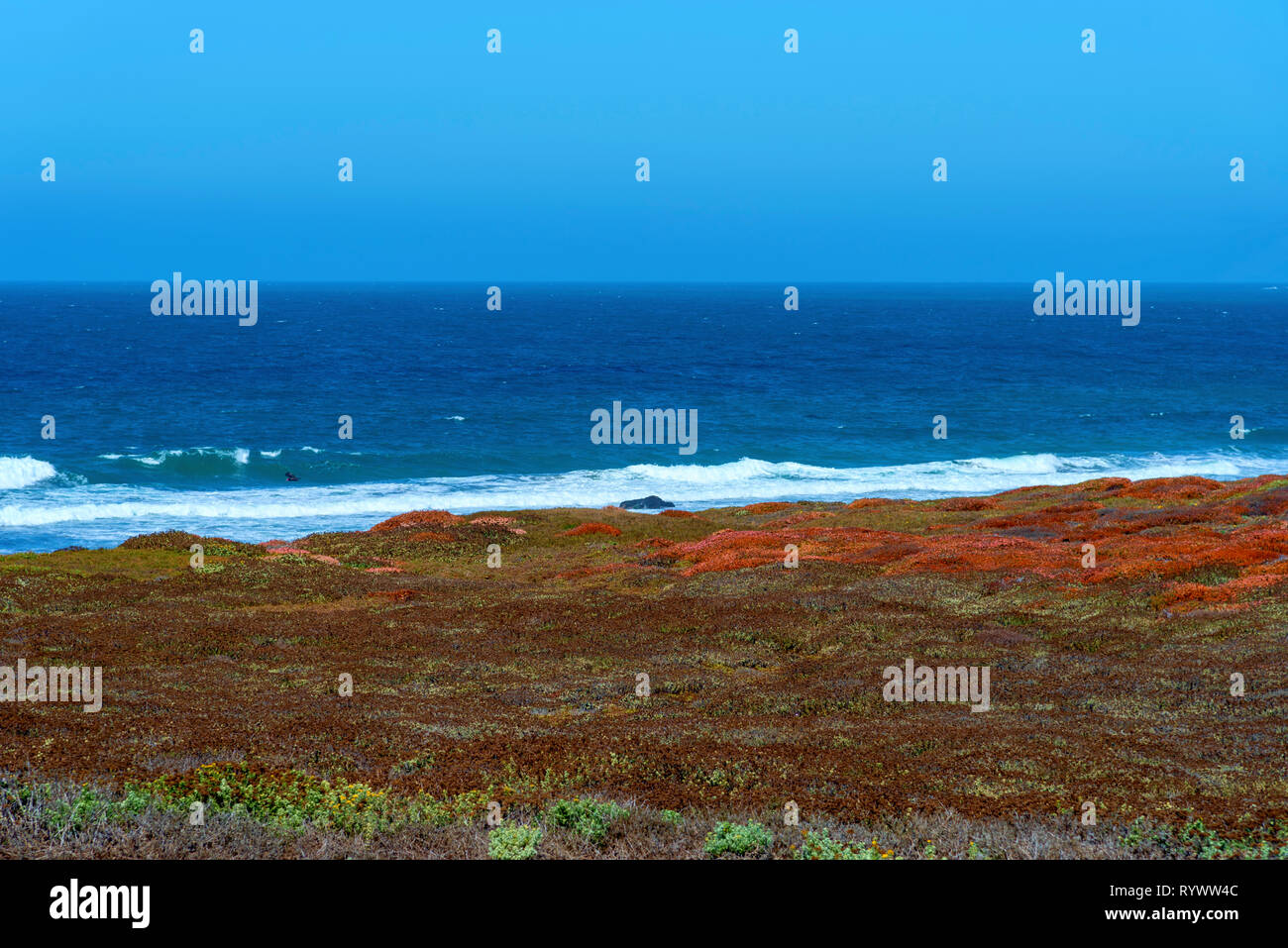 Dark blue ocean waves with white waves breaking onto shoreline under bright blue sky. Autumn colored fields overlooking seashore beyond. - Stock Image