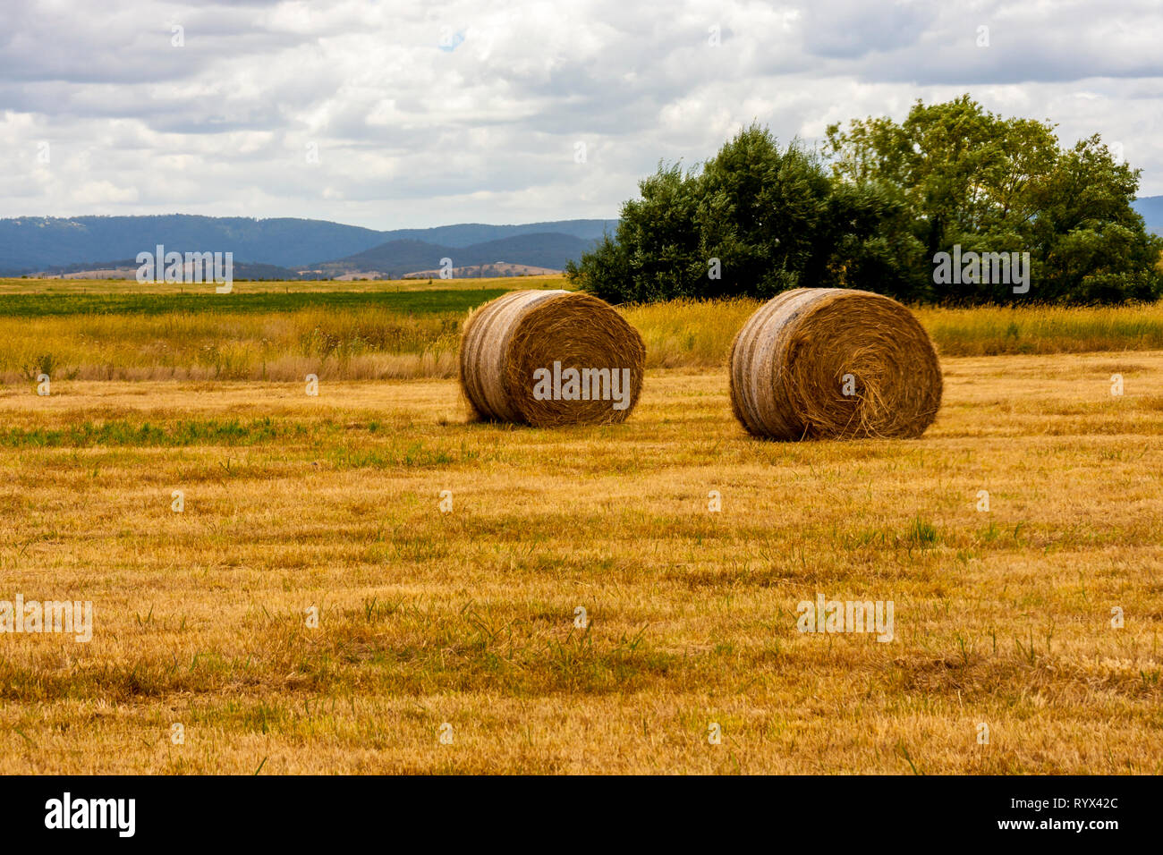 Yellow ripe haystacks of wheat, field in the South Australia. Rural landscape. - Stock Image
