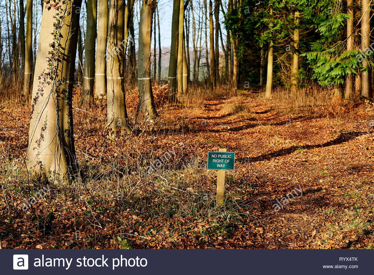 No Public right of way sign in a forest in Stonesfield in Oxfordshire in the Cotswolds - Stock Image
