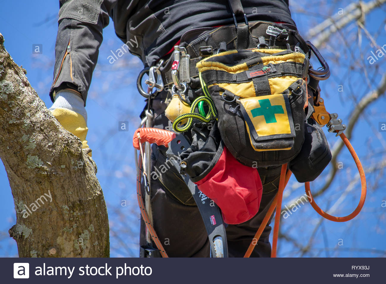 Close up of harness and gear worn by an arborist climbing a tree, torso view, from behind. - Stock Image