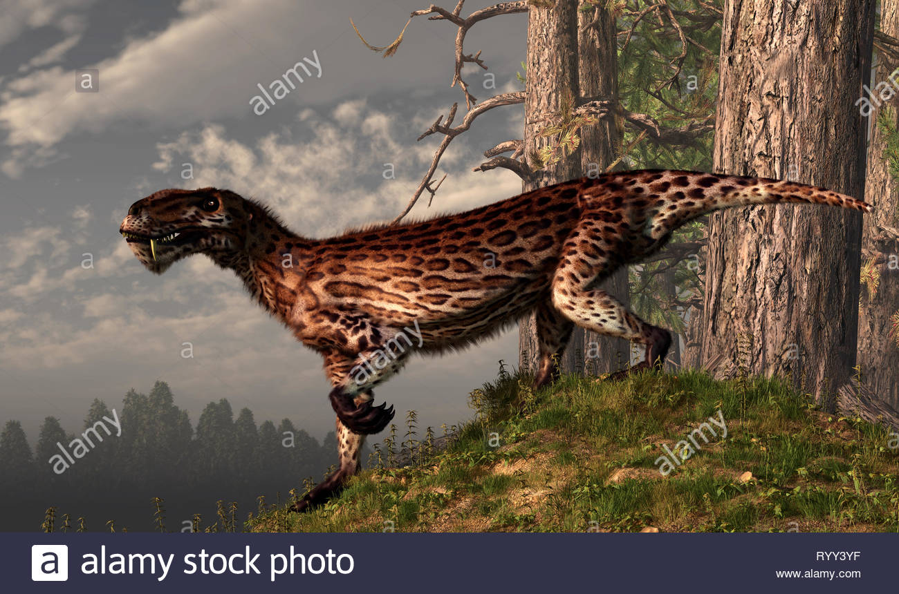 Lycaenops was a member of the Therapsids, an order that includes the ancestors of mammals. They existed before the dinosaurs - Stock Image