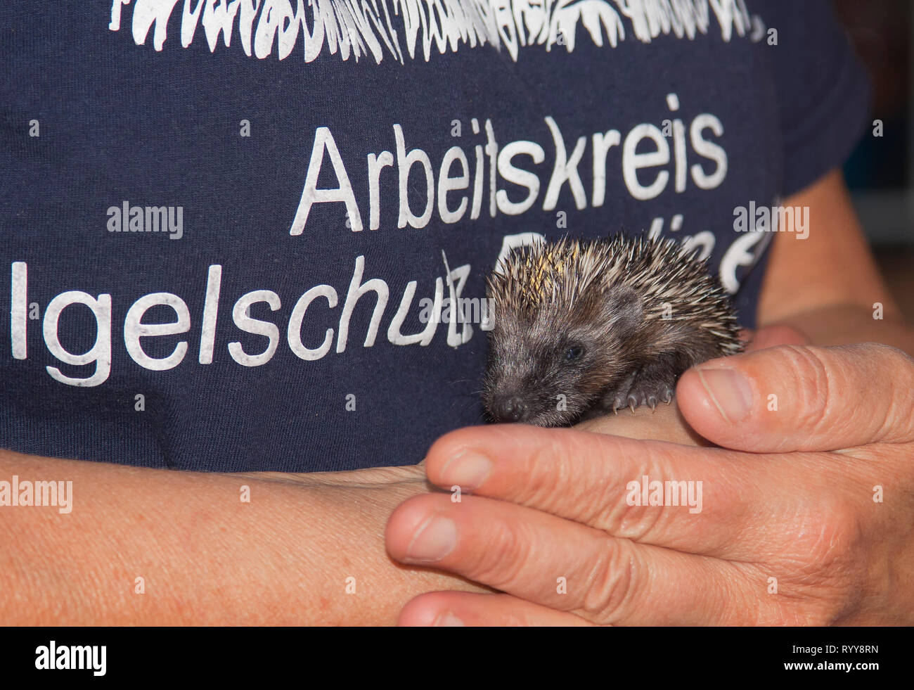 Working group to  protect hedgehogs, Berlin, Germany - Stock Image