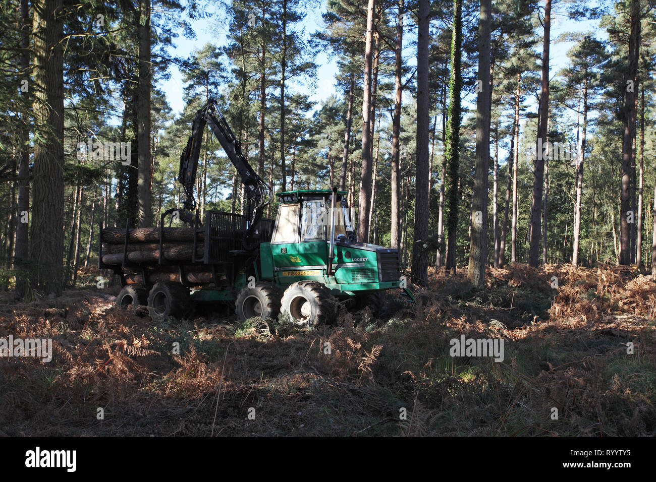 Forwarder collecting felled timber Frame Heath Inclosure New Forest National Park Hampshire England UK Stock Photo