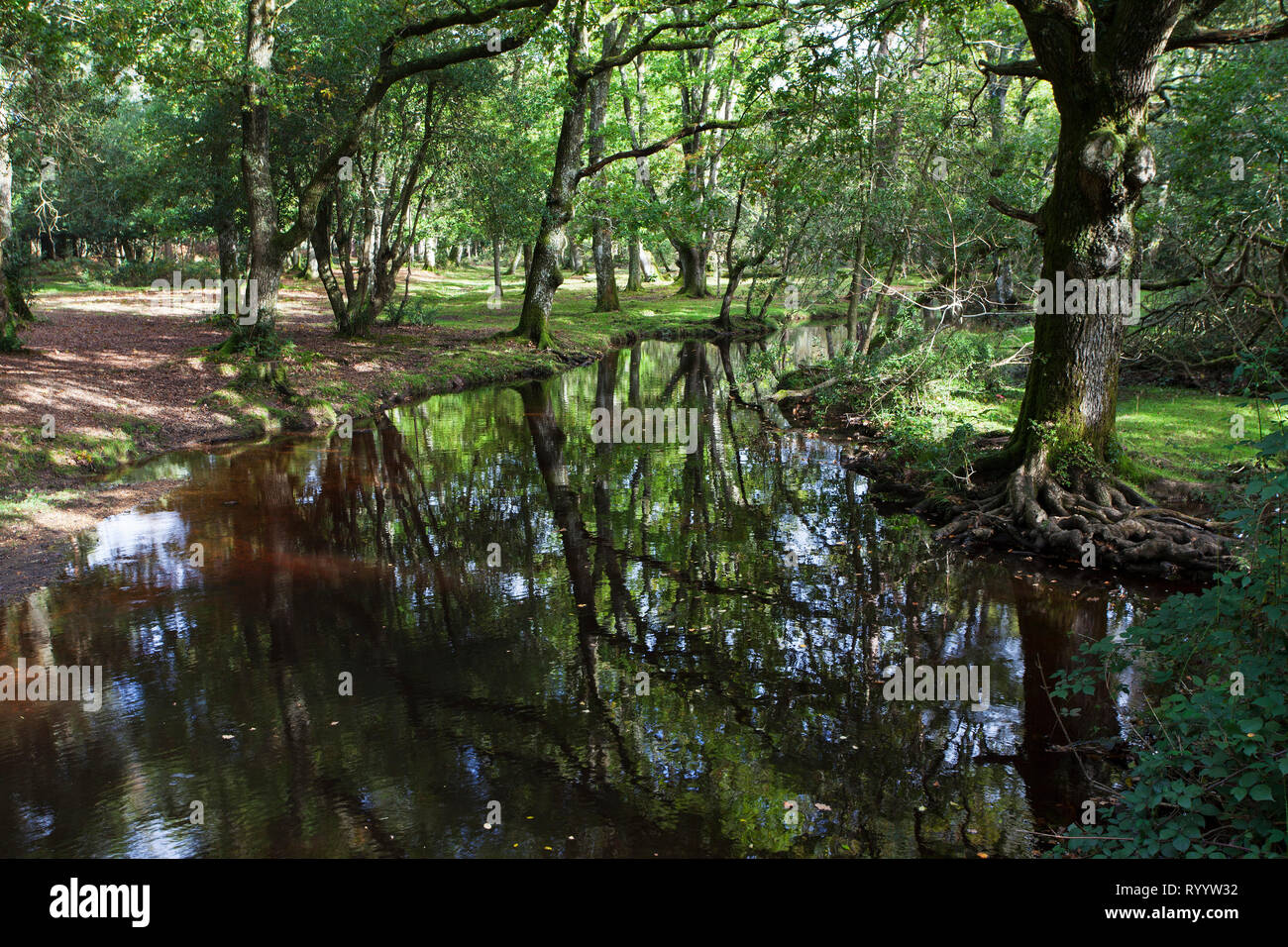 Ober Water stream near Ober Corner, New Forest National Park, Hampshire, England, UK, October 2017 Stock Photo