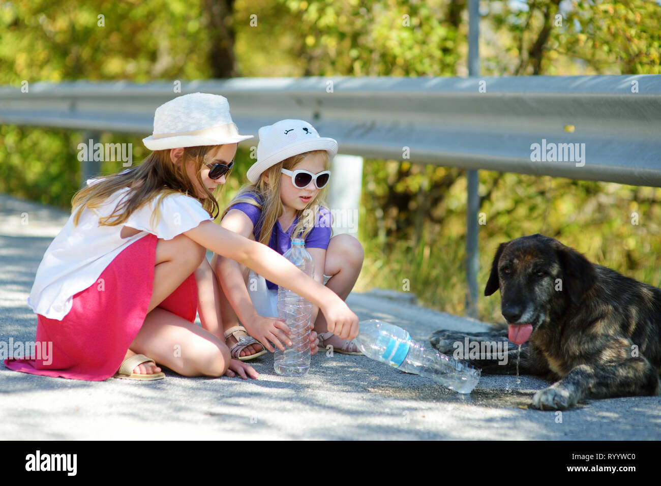 Thirsty black stray dog drinking water from the plastic bottle on hot summer day. Two kids giving cool water to thirsty dog. Caring for animals during - Stock Image