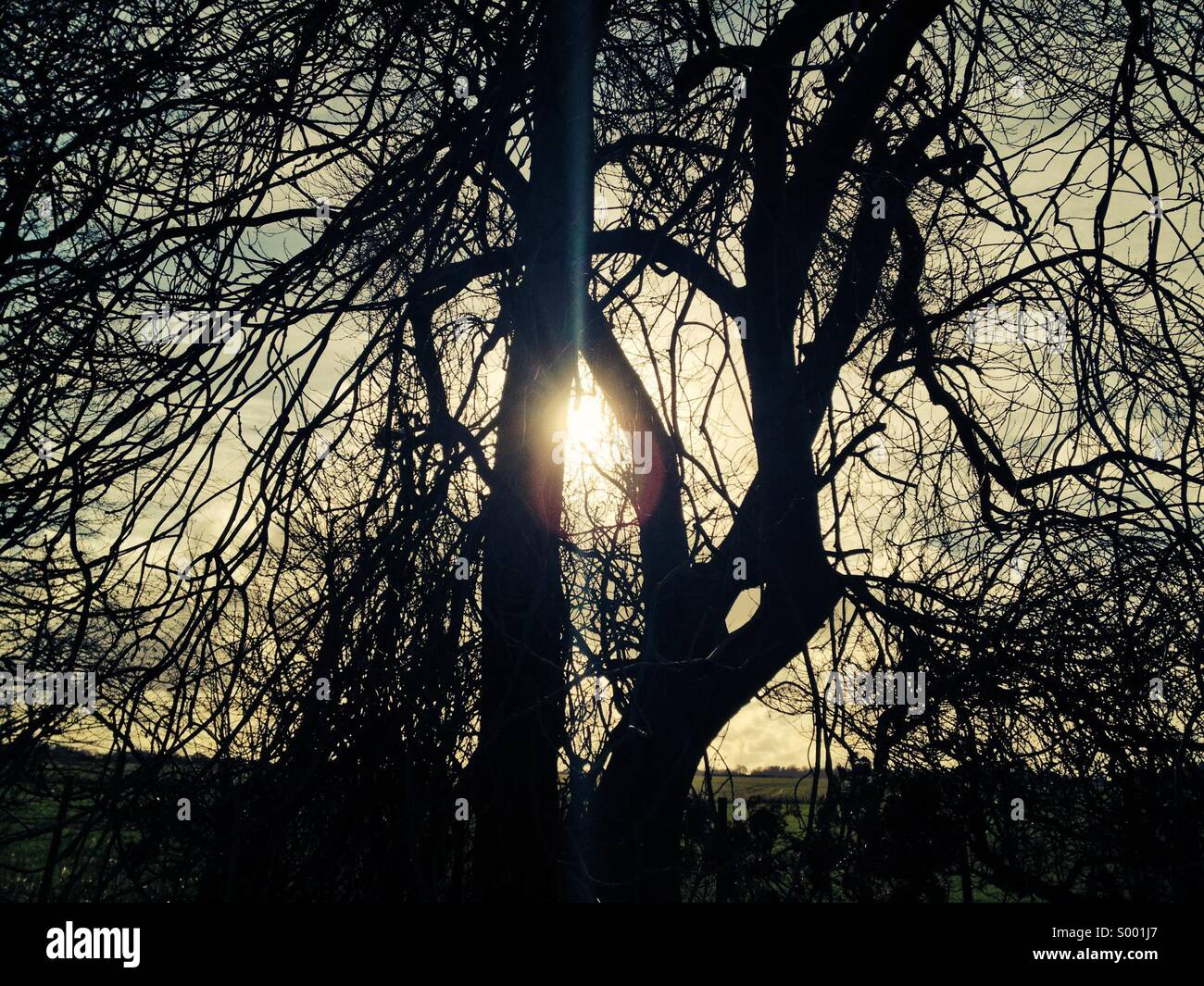 Sunlight and old tree - Stock Image