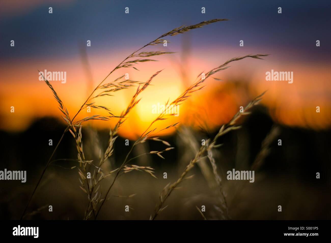 Sunset - fields of gold Stock Photo