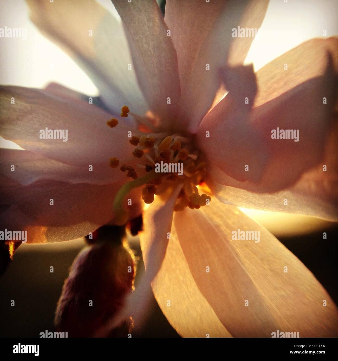 Blossom in the sun Stock Photo
