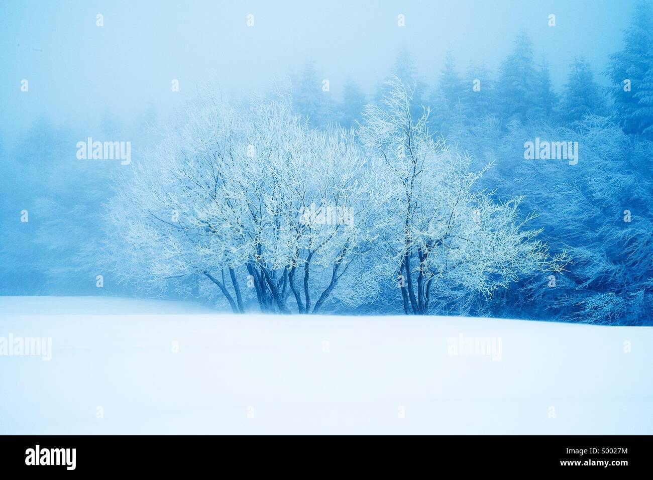 Snow - Stock Image