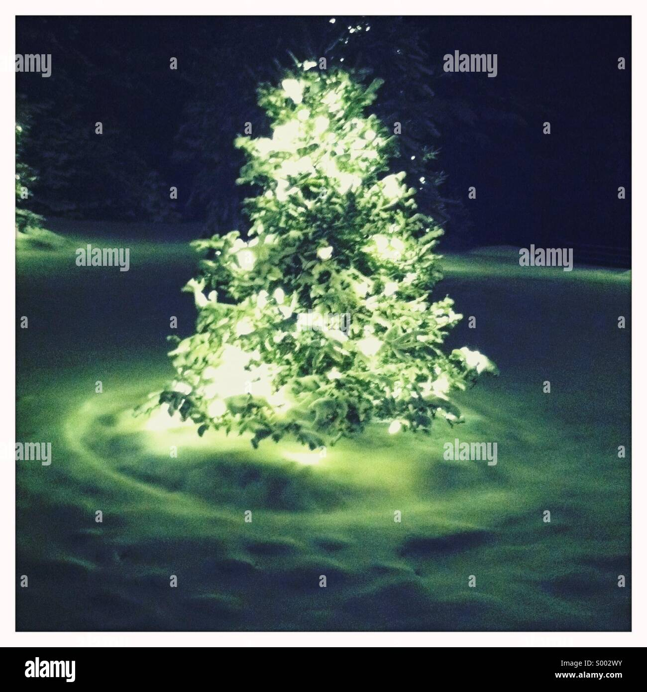 A snow covered tree with lights seen in a field of snow at night - Stock Image