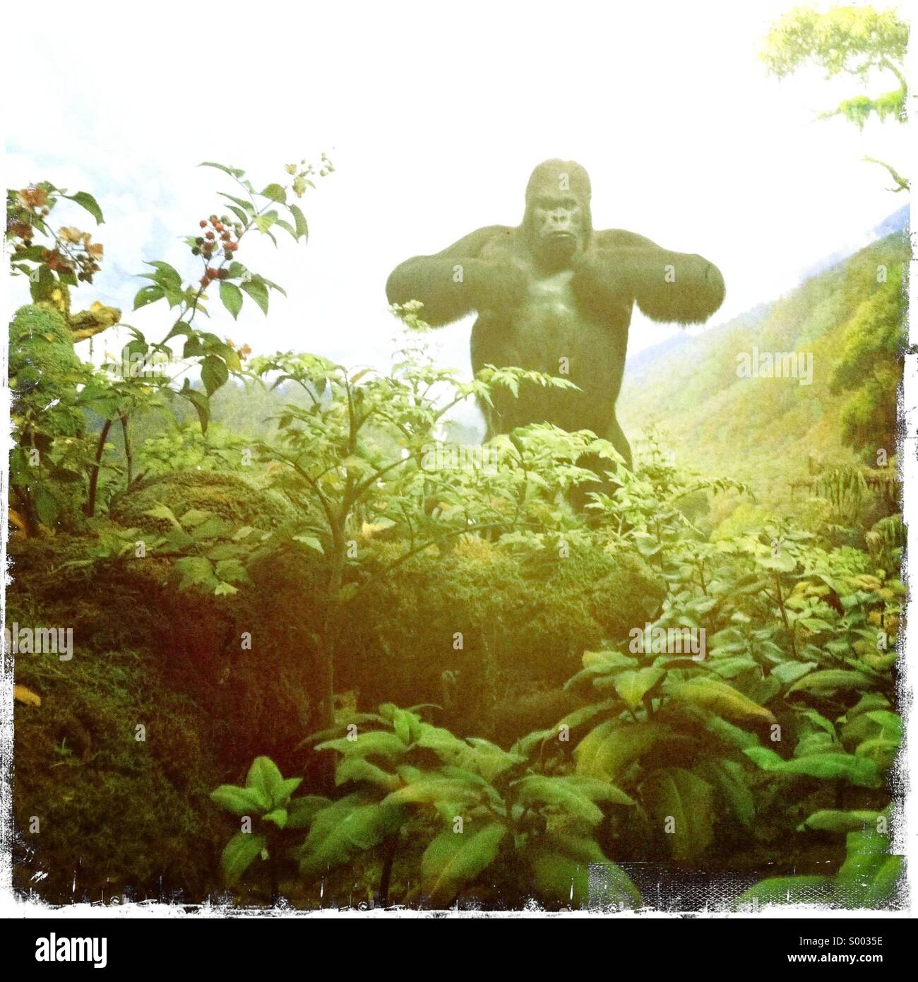 A fake Gorilla in a painted environment - Stock Image