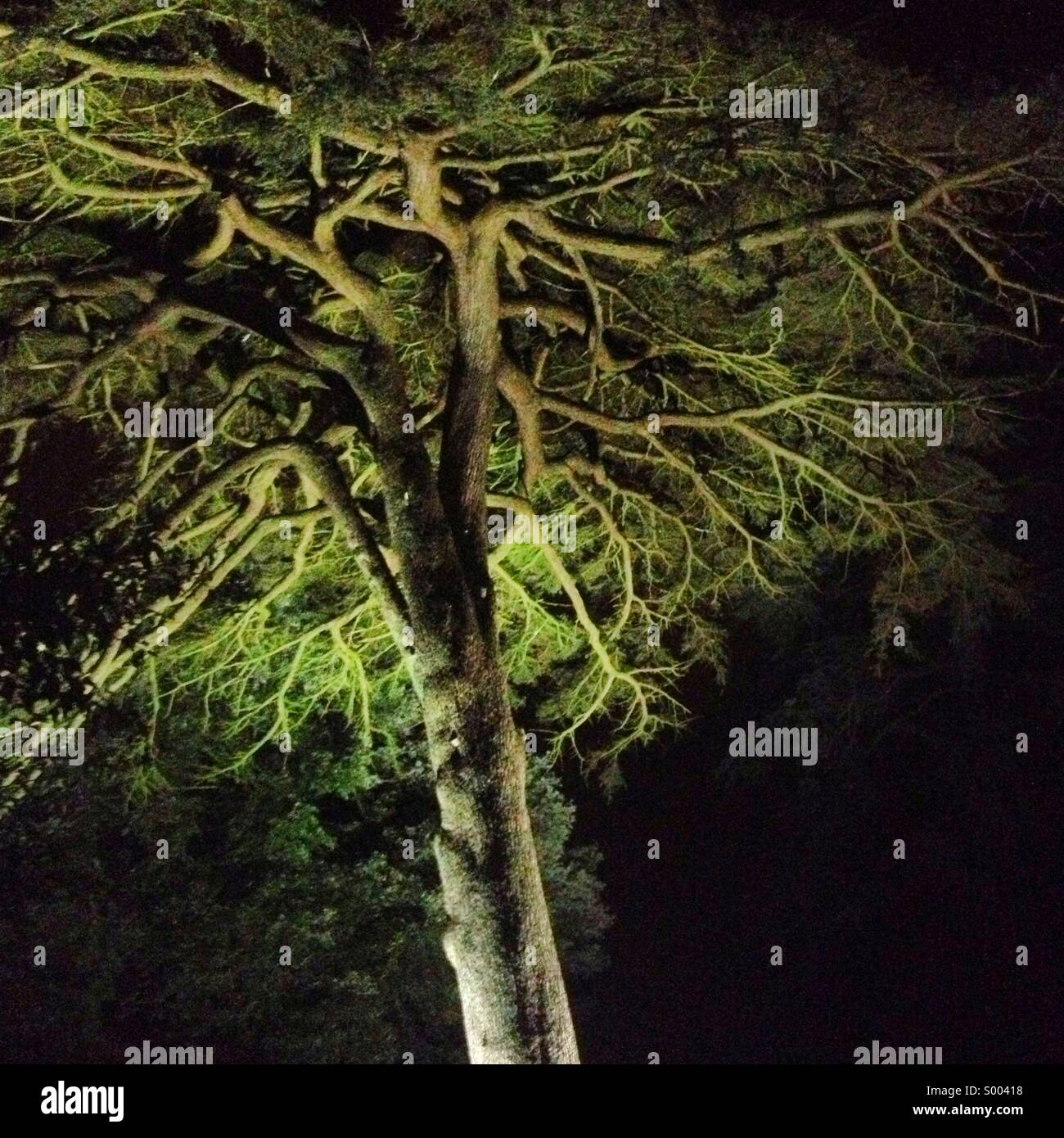 Hestercome Night Glow - Stock Image
