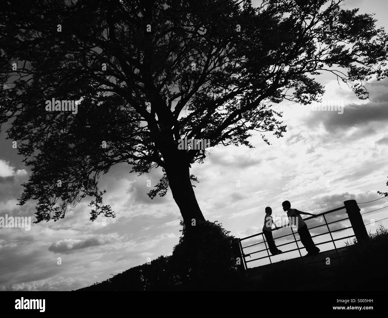 Two children silhouette standing on a gate next to a large tree - Stock Image