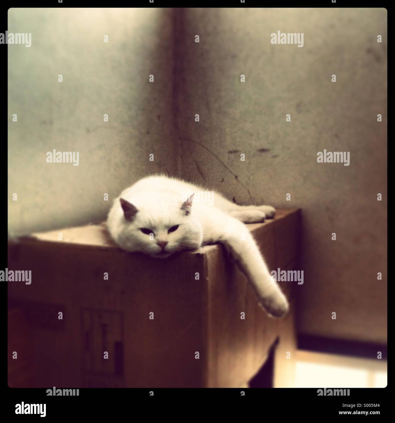 White cat sitting on cardboard box in tenement landing - Stock Image