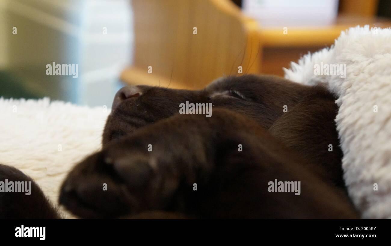 Snoozing - Stock Image