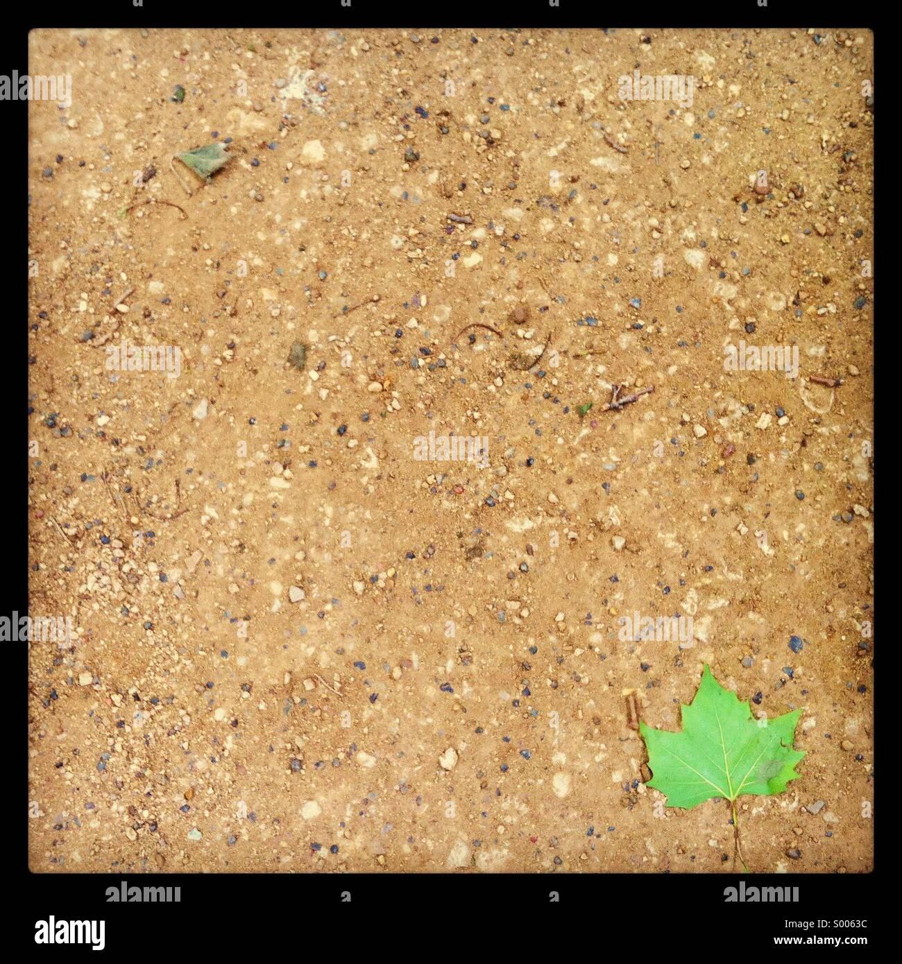 Green leaf on a sandy floor - Stock Image