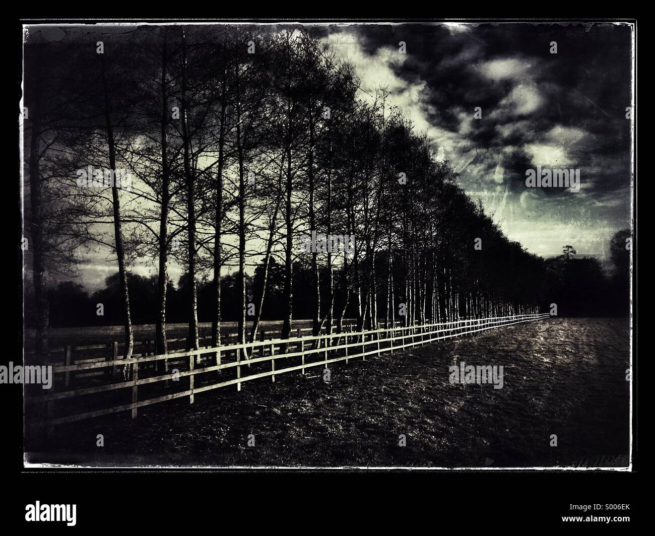 Line of Trees and new fencing in early spring managed woodland - Stock Image