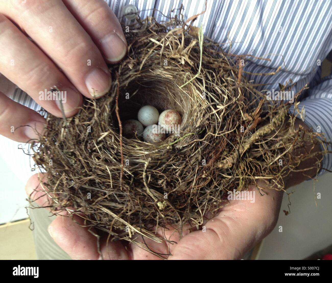 Holding bird nest - Stock Image