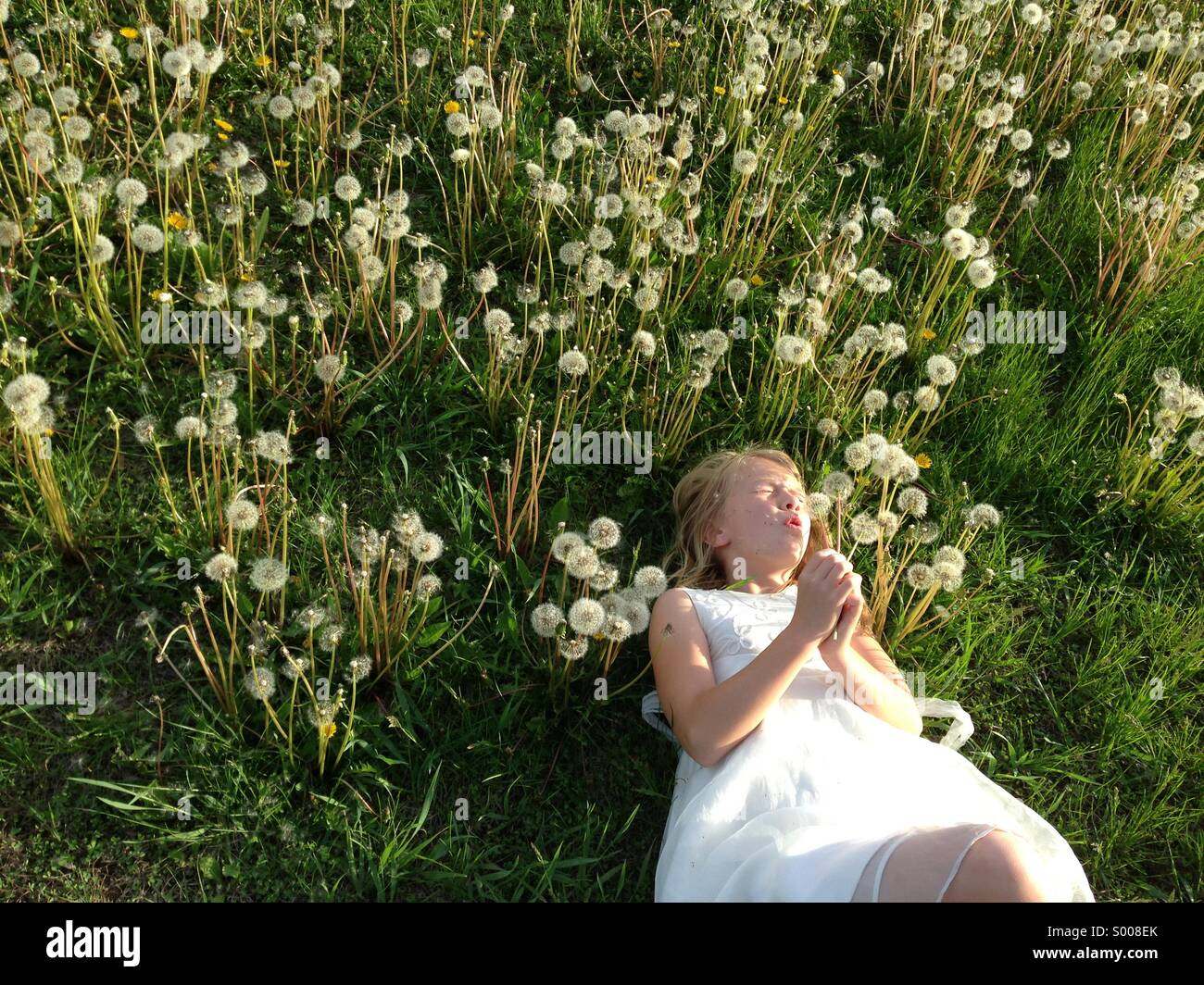A girl in a field of dandelions blows the seeds into the air. - Stock Image