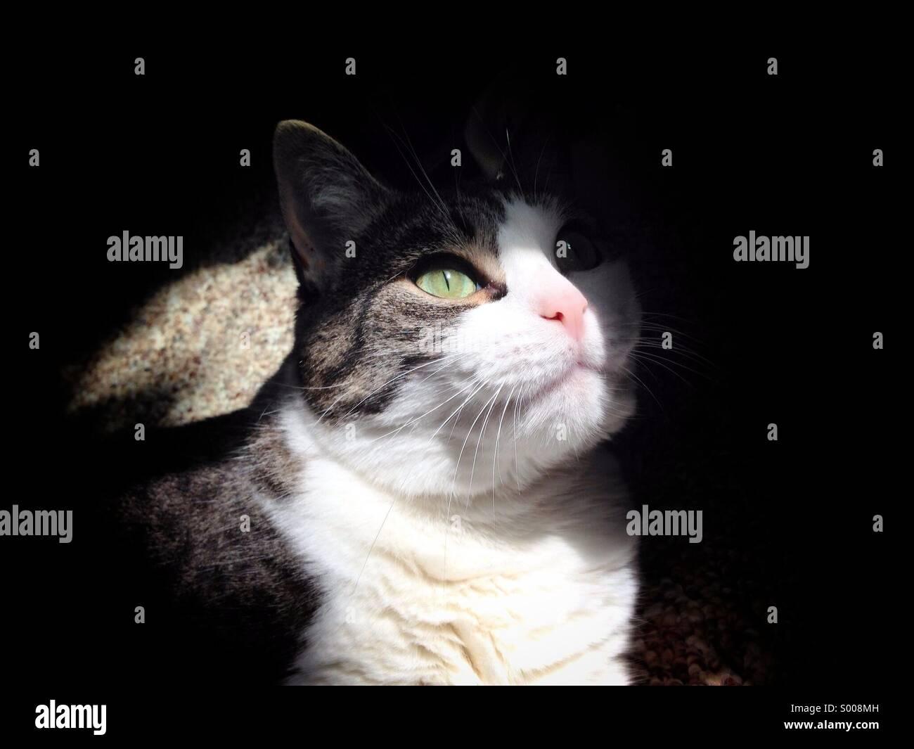Kitty cat enjoying sunshine - Stock Image