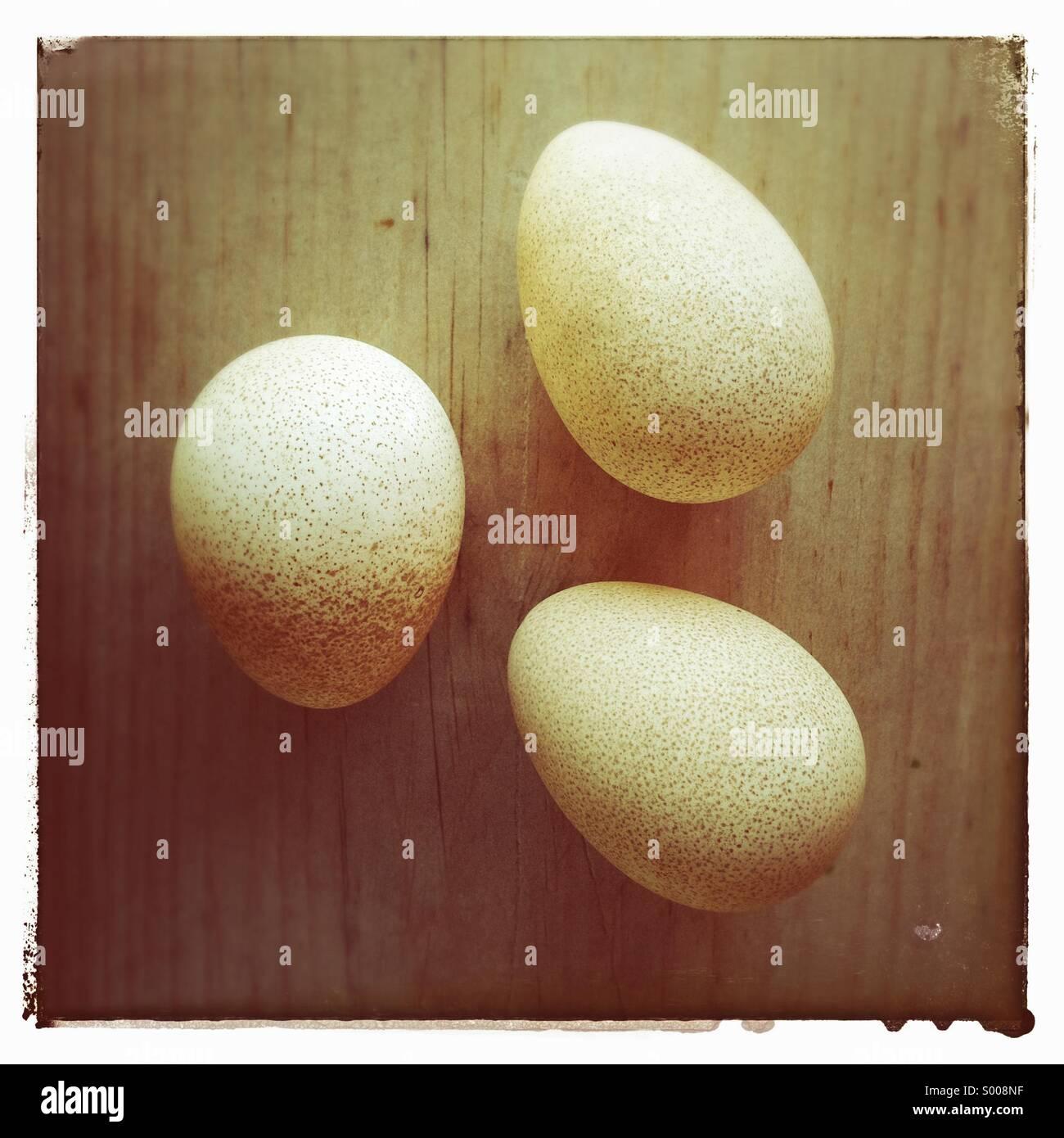 Guinea fowl eggs - Stock Image