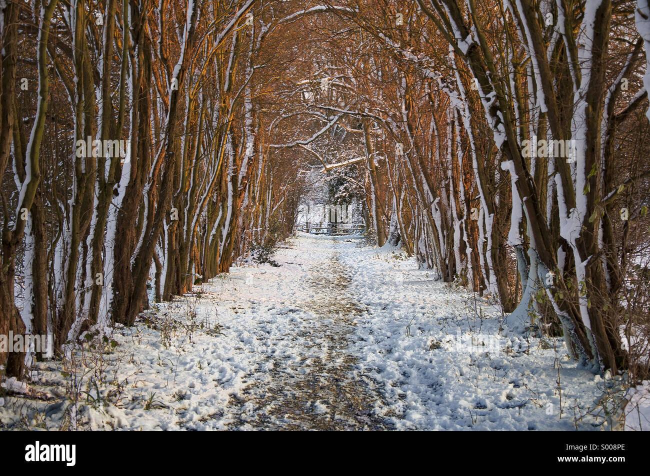 Winters path - Stock Image