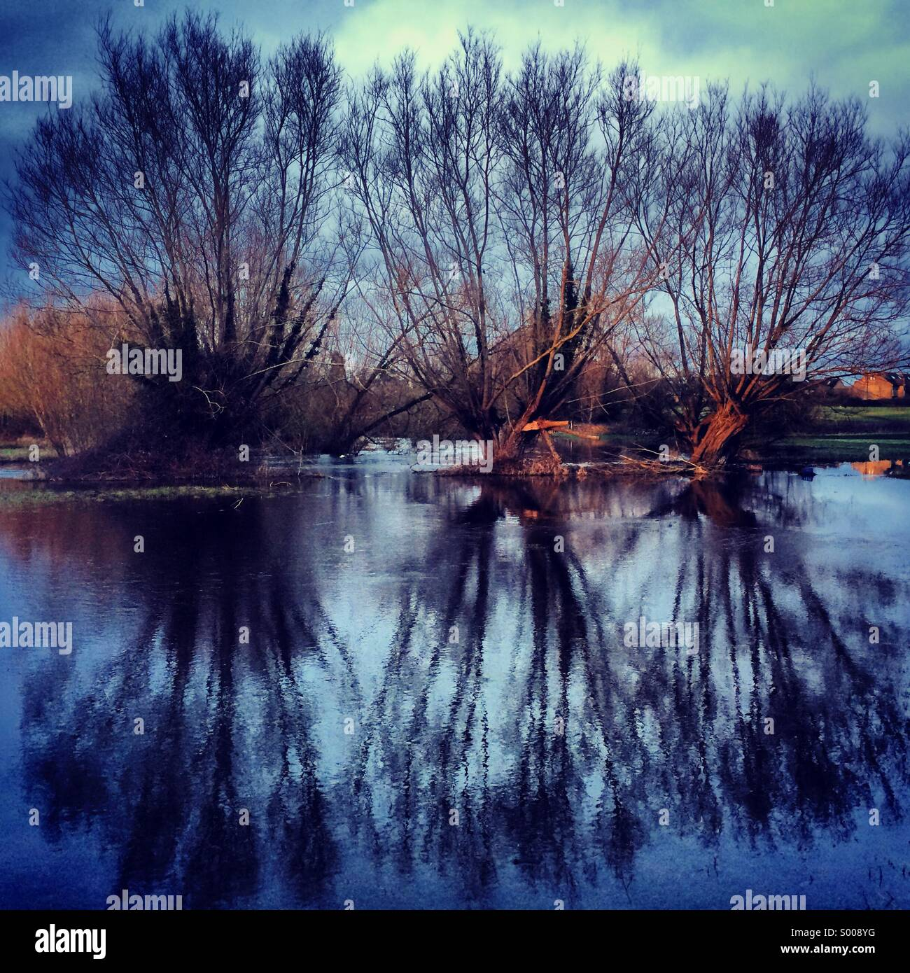 Winter trees and floods in Witney - Stock Image