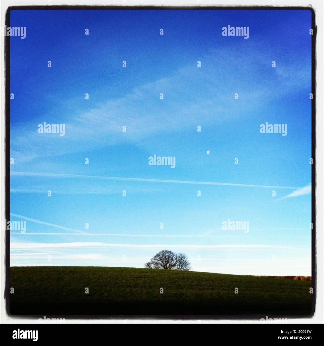 Tree on horizon - Stock Image