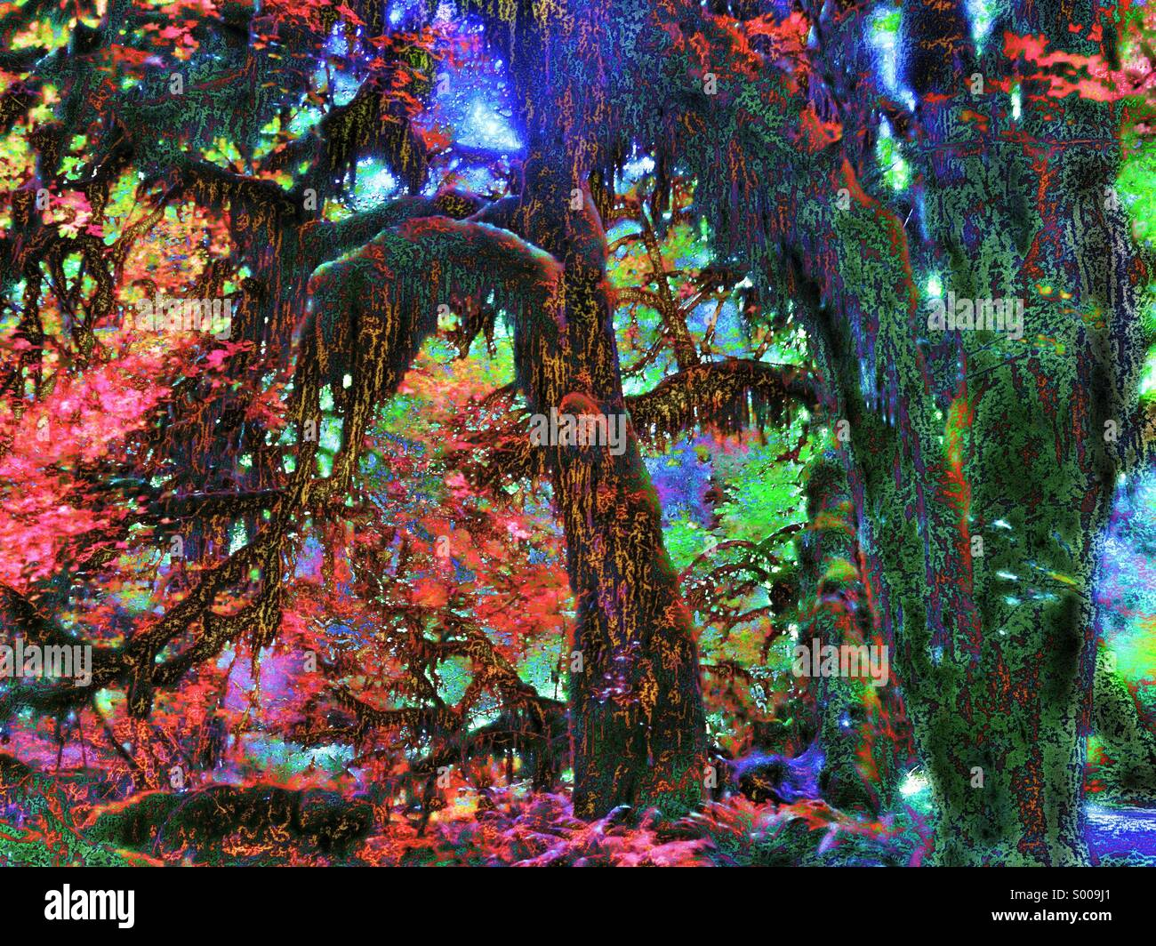 What a temperate rainforest might look like in Wonderland - Stock Image