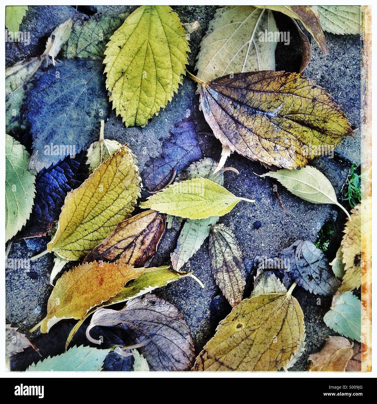 Wet fallen autumnal leaves background on the floor of a city. - Stock Image