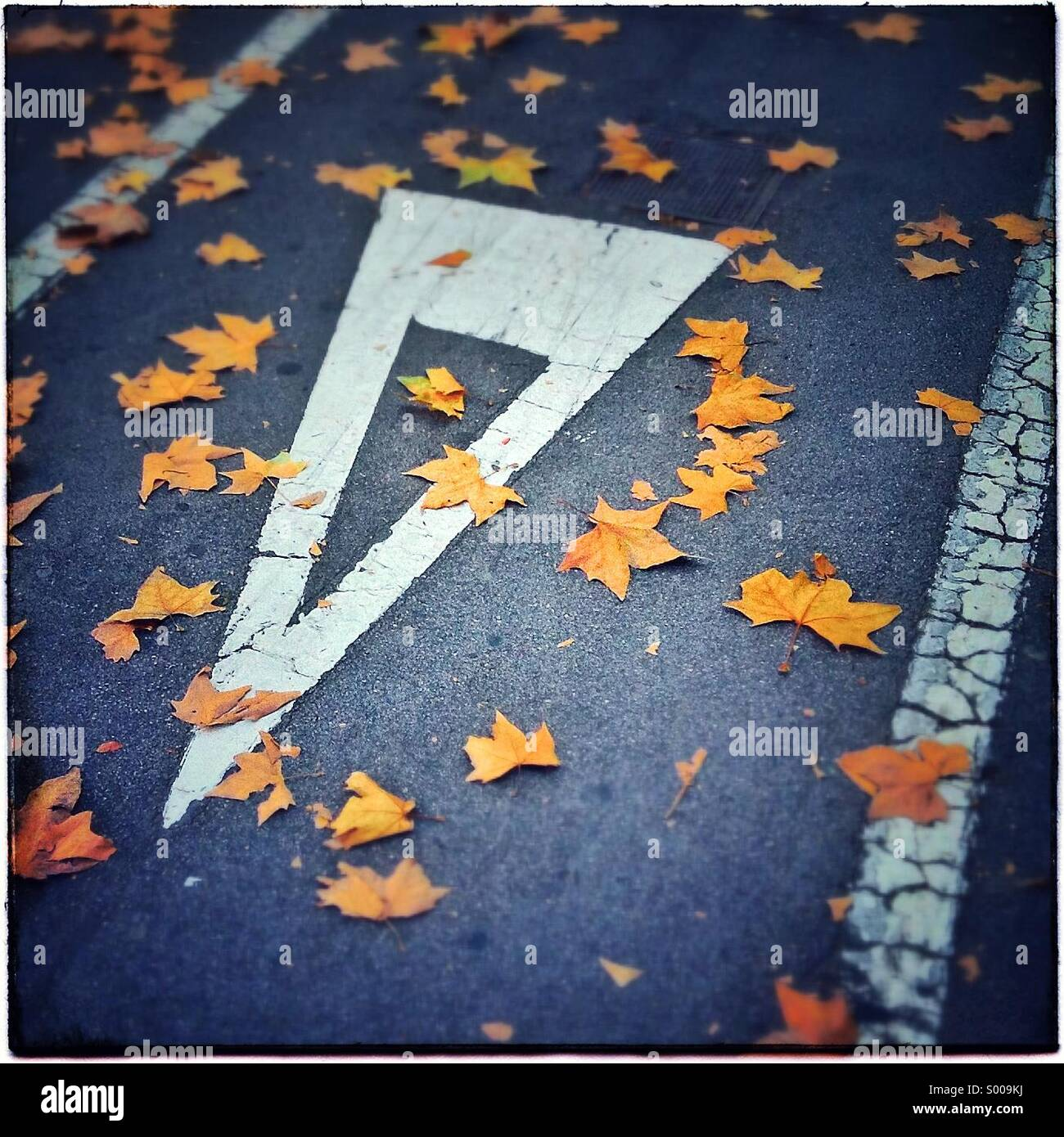 Gives way yield sign on autumm in Barcelona. Catalonia, Spain - Stock Image