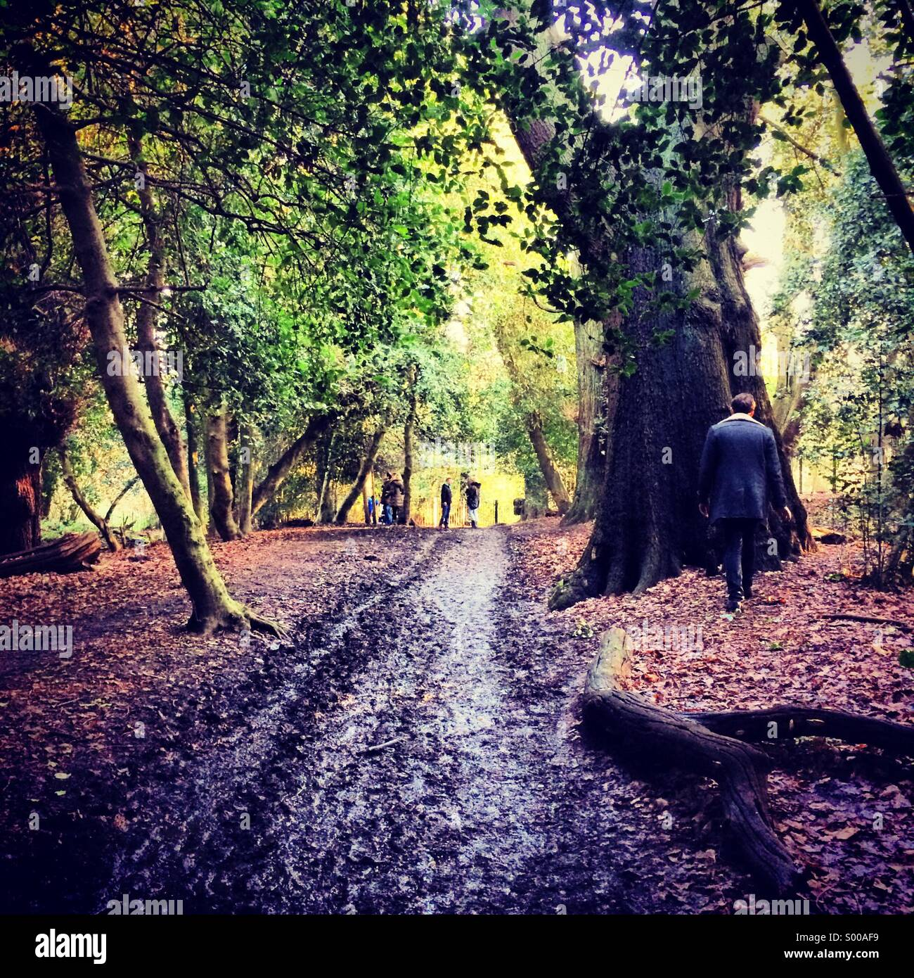 Morning walk in Hampstead Heath - Stock Image