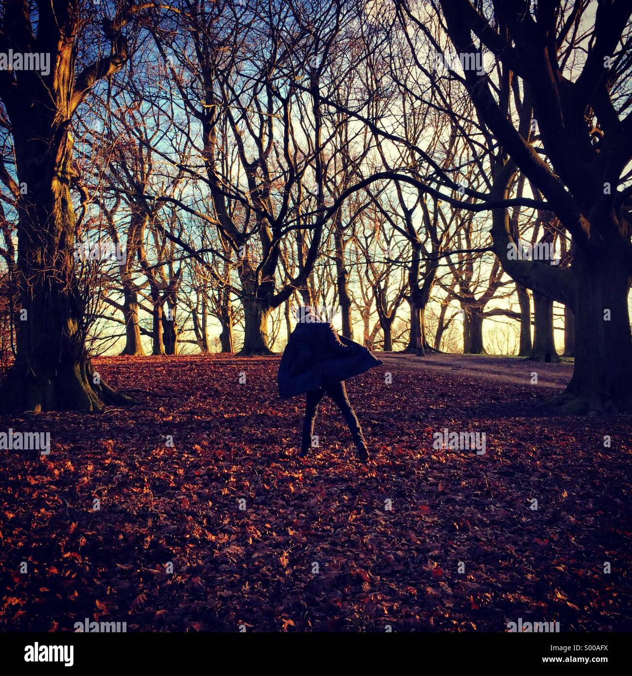 Walk through Hampstead Heath in the evening light with date - Stock Image