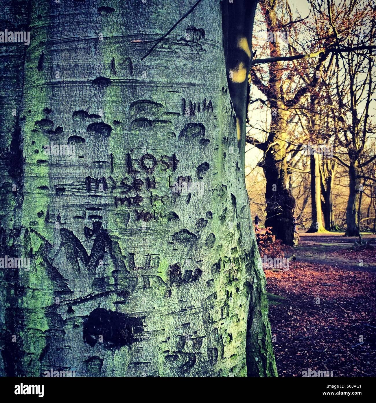 Tree carving at Hampstead Heath London - Stock Image