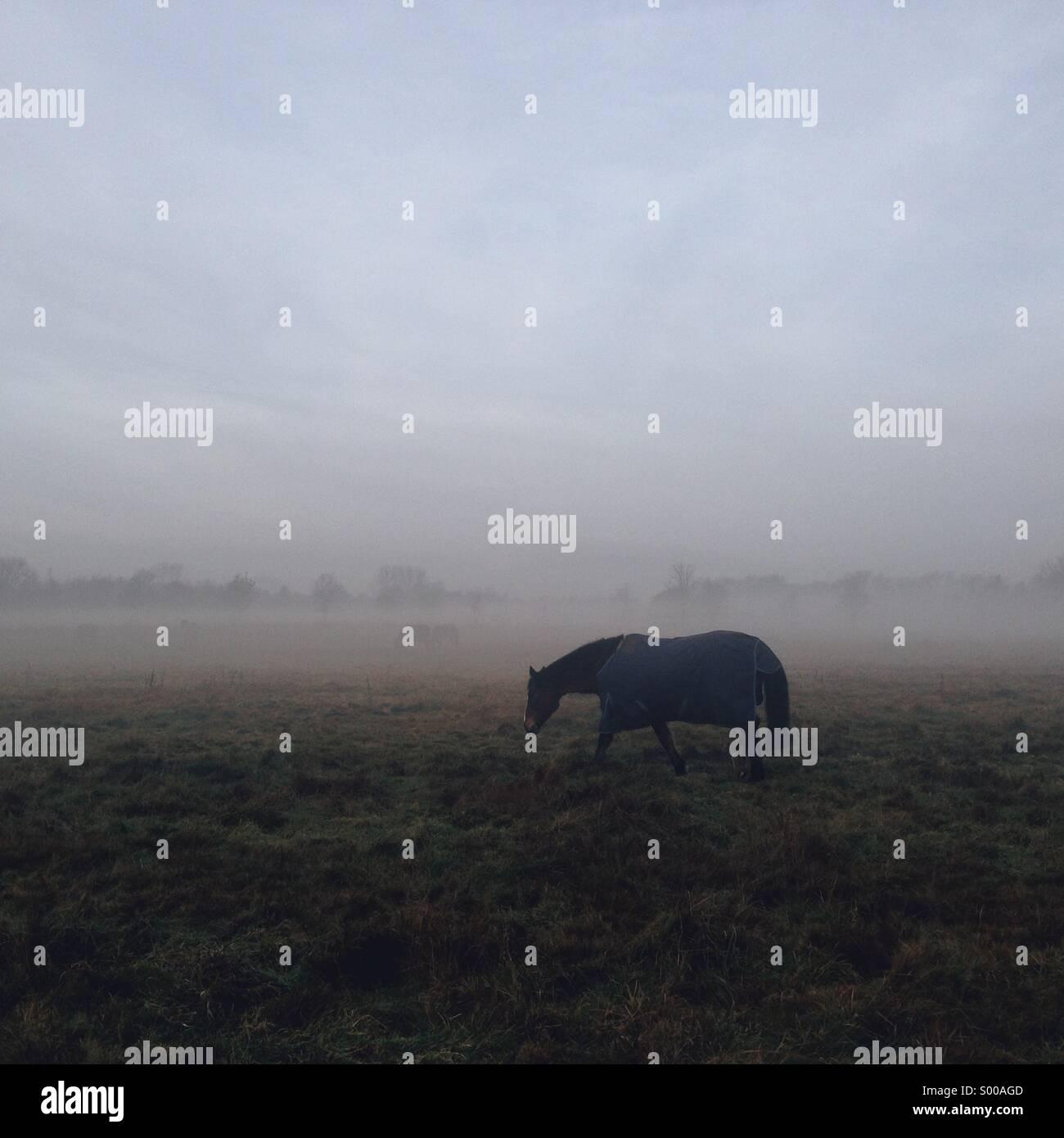 Lonely horse in blue coat on a foggy bleak landscape - Stock Image