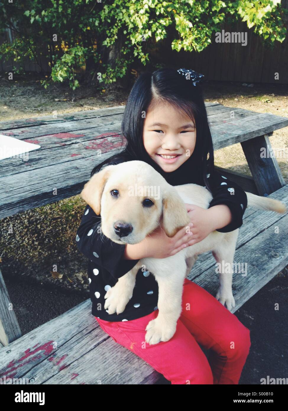Young girl and pet puppy - Stock Image