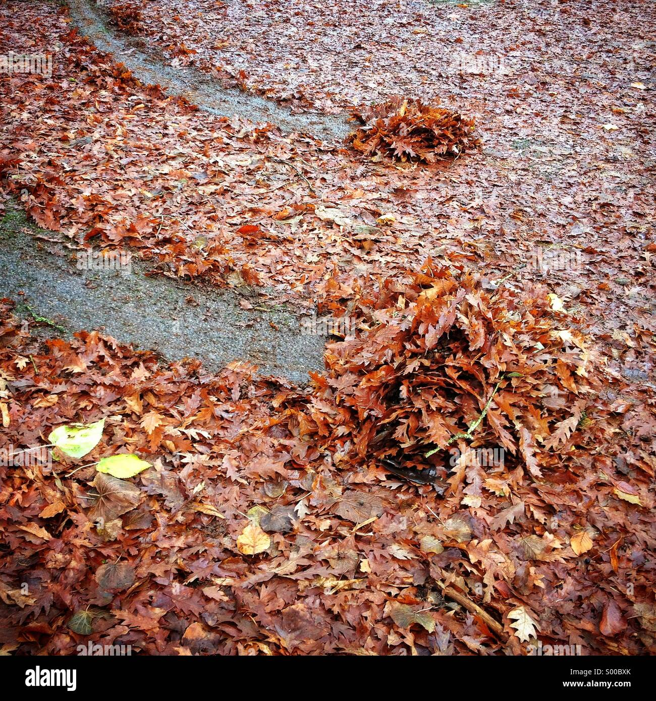 Skid marks in wet leaves - Stock Image