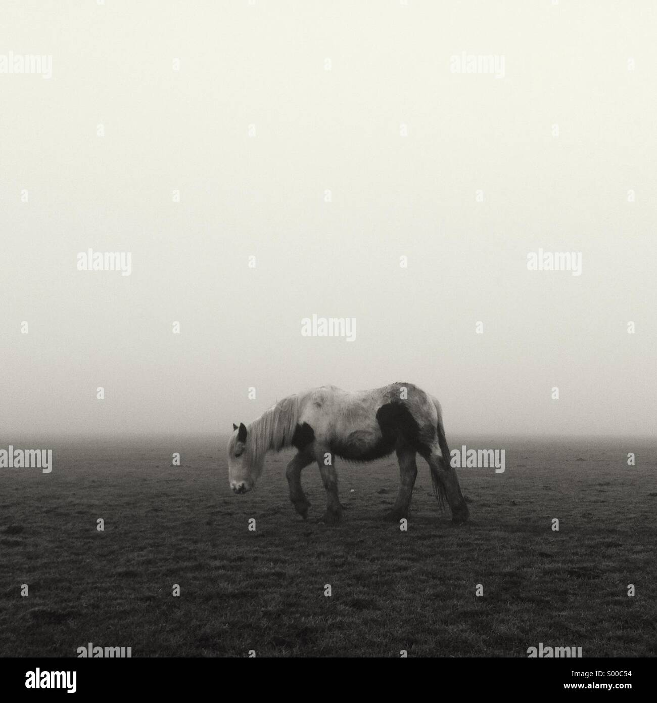 Lonely small Horse sad and lost on the dense fog of Lincoln West Common - Stock Image