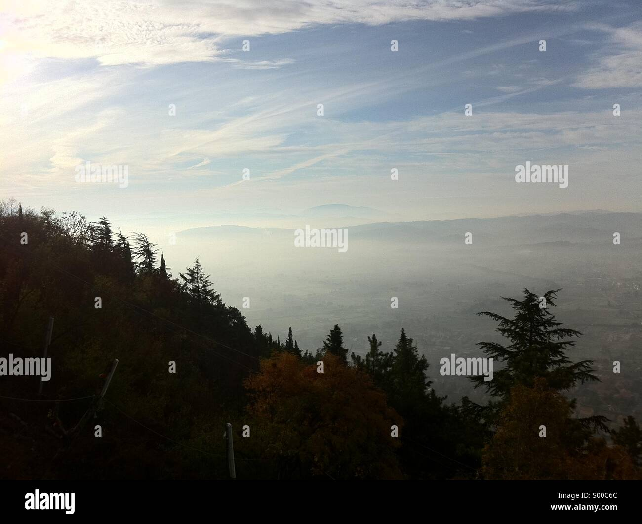 Foggy landscape with a forest of firs and a sea of fog - Stock Image