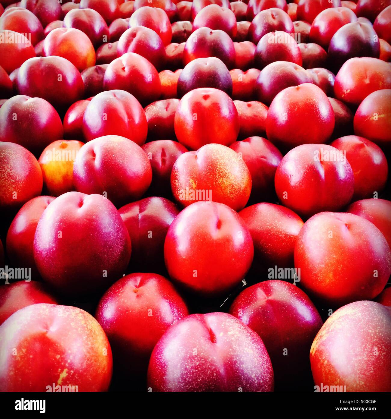 Rows and rows of plums - Stock Image
