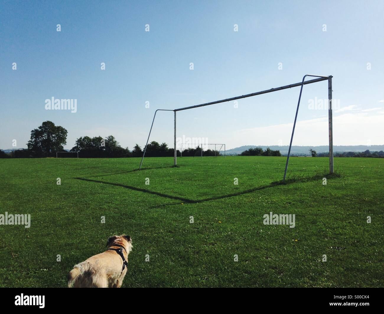 A dog walking amongst the goal posts on a sunny day. - Stock Image