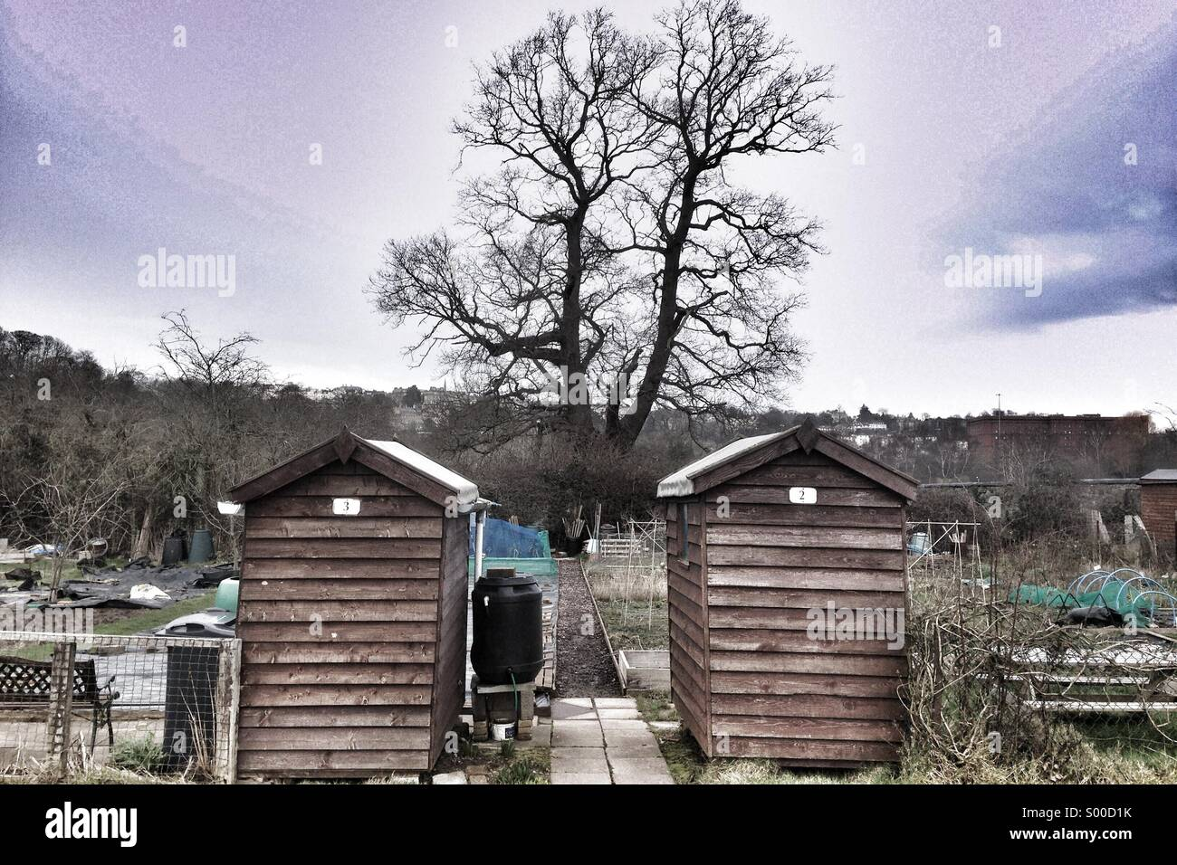Two allotment sheds with tree behind. Winter. Stock Photo